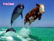 Dolphin or Cow ???