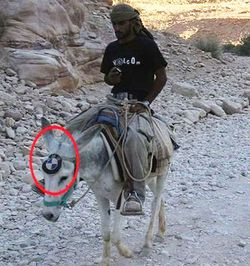 wkakak Keledai BMW :v