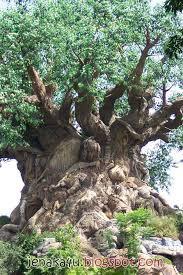 ni pohon dari zaman purba mngkin dah ada kali ya,,, hehe...