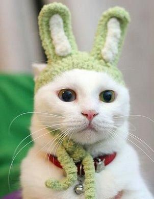 persilangan kucing + kelinci -_- :v