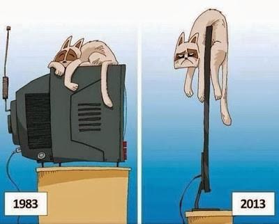 Sobat Pulsk, ini dia efek negatif dari kemajuan IPTEK. Kucing jadi korbannya deh.