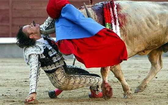 Sobat Pulsk, ini gambar seorang matador sedang di tanduk sang banteng, ngeri ya. Kalau bisa kita jangan menyiksa binatang, apalagi disiksa baru akhirnya dibunuh hanya untuk hiburan kita saja. Kasihan kan banteng tidak berdosa harus mati tiap.