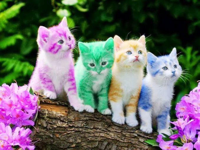 Sobat Pulsk, bagaimana pendapat anda dengan penampilan kawanan kucing lucu ini, indah bukan>