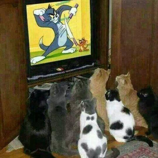 Sobat Pulsk, tahu tidak apa film kesayangan dari kucing-kucing peliharaan kita ? Ya ,anda benar, film itu namanya Tom and Gerry.