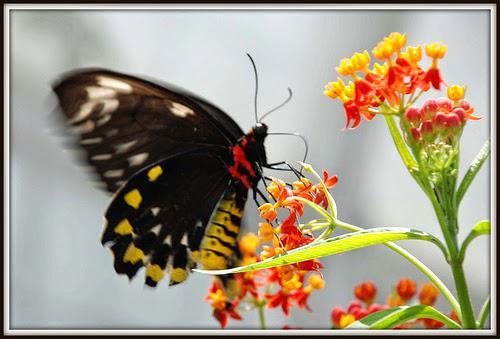 Kumpulan Gambar kupu2 CAntik...