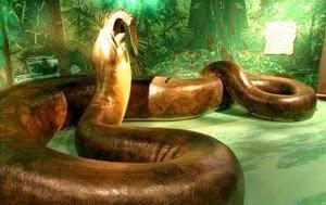 5 Foto Ular Terbesar di Dunia yang Pernah Ditemui Ular adalah reptil yang tidak memiliki kaki dan memiliki tubuh yang panjang. Sama seperti kadal ular juga termasuk reptil yang memiliki sisik, namun bedanya kadal memiliki kaki, sedangkan ular