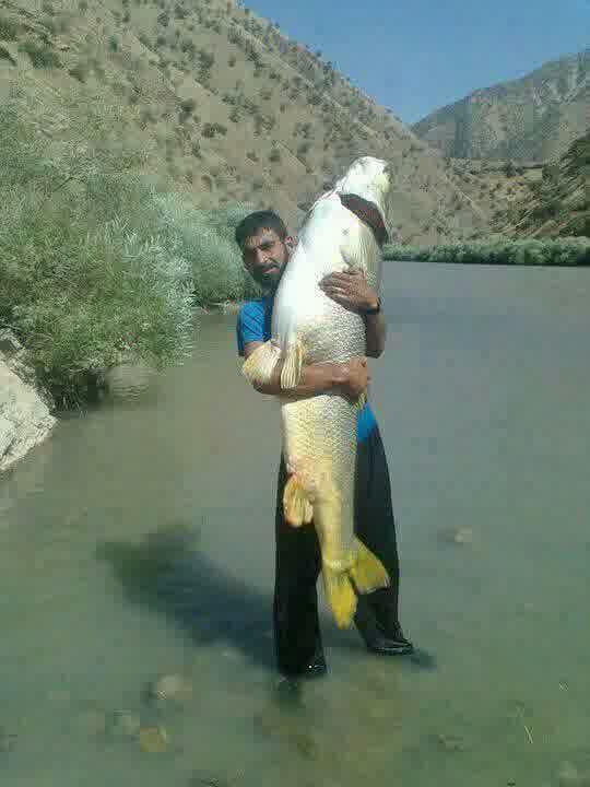 Sobat Pulsk, ni dia pemancing hebat, dapt ikan besar bisa untuk makan satu minggu.