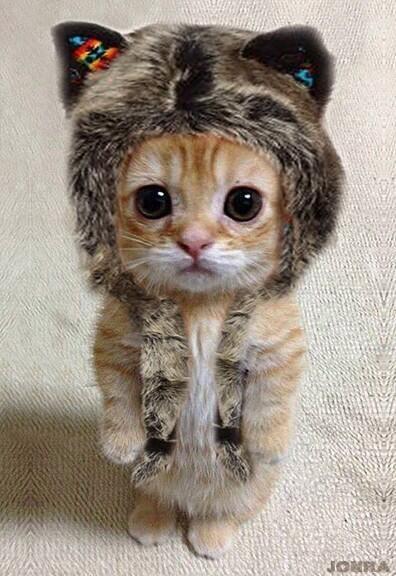 Kucing imut mau berangkat sekolah,,,duh ekspresi datarnya itu yang bikin lucu banget. #kucing #lucu