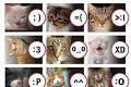 Emotion si Kucing imut-imut