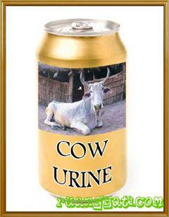Minuman kaleng ini diperkirakan akan menjadi saingan Cola,tapi Siapa yg mau beli,bahan baku utamanya Air Seni Sapi,COW Urine.iiiih jijik.wow nya donk.