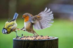 Burung menendang burung :D