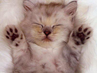 Lucu nggak? WOWnya ya... #kucing #lucu