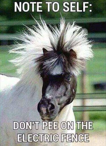 Kuda Jabrik. Hahaa.... Share the Laugh!!!