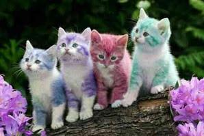 its so cute cats, is it????