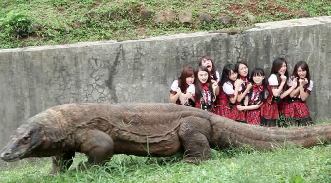 Nabilah JKT 48 Dibuang di Kandang Komodo Entah apa sebabnya, tiba-tiba Ayu Dewi membuang delapan member JKT48 ke kandang komodo. Tiga di antaranya ialah Yuvia, Haruka dan Nabilah. Lantas, apa yang dilakukan tiga member itu untuk menyelamatkan?