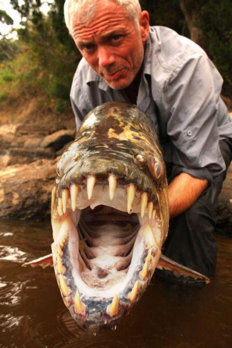 Bayangkan jika Ikan Piranha Raksasa sebesar ini populasinya ada disungai-sungai diIndonesia?? Hmmmâ?¦..