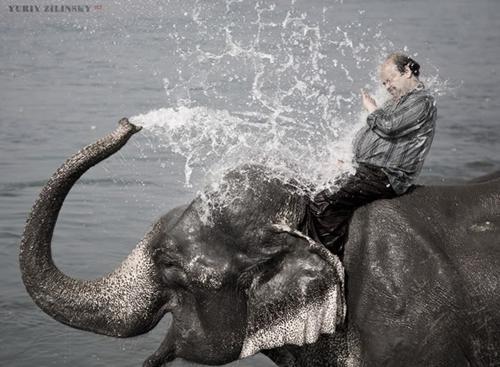 Sobat Pulsk, keren ya aksi sang gajah memandikan sang pawang.