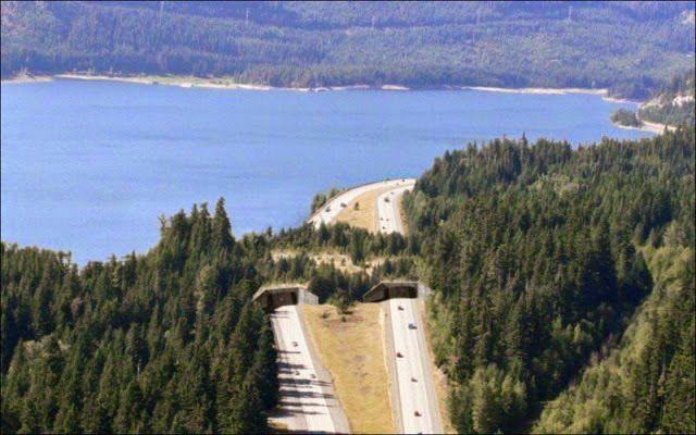 Manusia dengan baik hati membuatkan jembatan khusus Hewan di jalan jalan tol agar gak ketabrak. cek jembatan-jembatan hewan mana yang sudah di buat disini http://bit.ly/1kZqng7