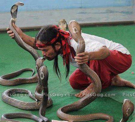Sobat Pulsk, ini baru pawang ular, tidak hanya satu atau dua ular kobra, tapi ada enam ular kobra dapat ditaklukannya.