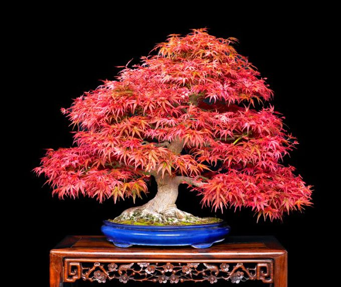 Japan Bonsai beautiful and Elegant (Flowers and bonsai plants) click here : http://www.creativehozz.com/2014/07/8-japan-bonsai-beautiful-and-elegant.html