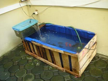 sobat pulsk, ingin punya kolam ikan sederhana ! buat saja