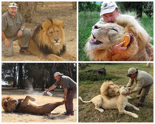 Alex adalah seorang pemberani yang berprofesi sebagi pemijat singa, semoga singanya gak mijat balik ya.. hihihi ^^