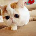 ngegemesin bgt kan kucingnya? pgn peluk!! hug hug !!
