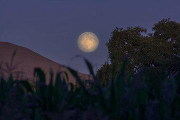 Foto-Foto Bulan Purnama Terindah Menghiasi Langit September 2013 (Harvest Moon)