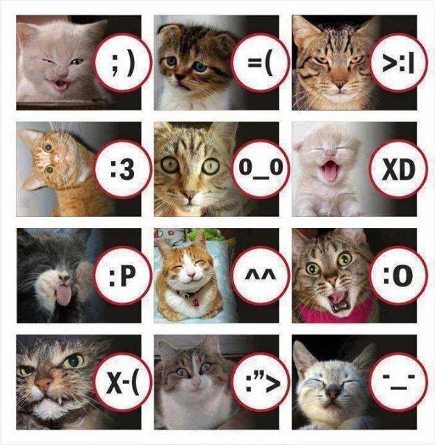 "Macam"" emotion oleh kucing :v"