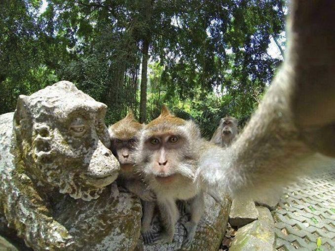 Selfie dulu yuk sama Nenek Monyetnya.. :D #hihihihi..