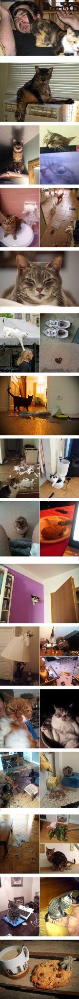saat kucing peliharaan berubah jadi jahat