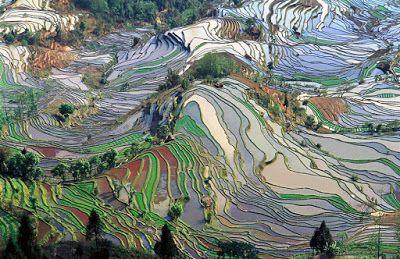 Dari jutaan hektar lahan persawahan di muka bumi, beberapa di antaranya menciptakan pemandangan maha dahsyat. Telusuri kumpulan foto di bawah ini, dijamin akan membuat kita takjub.