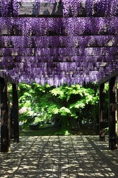 The Coolest Pergola