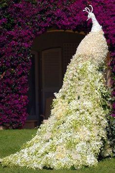 Topiary Burung Merak