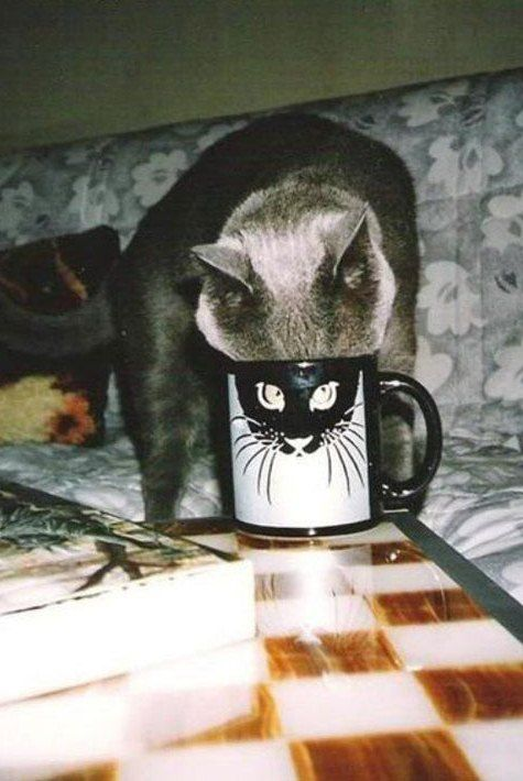 Mukanya Pas Di Mug!