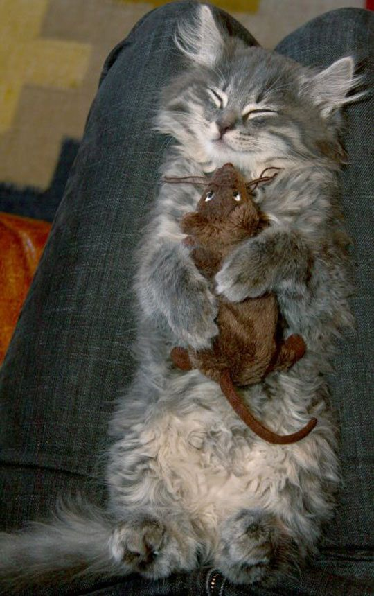 Tidur Bersama Tikus Mainan Kesayangannya