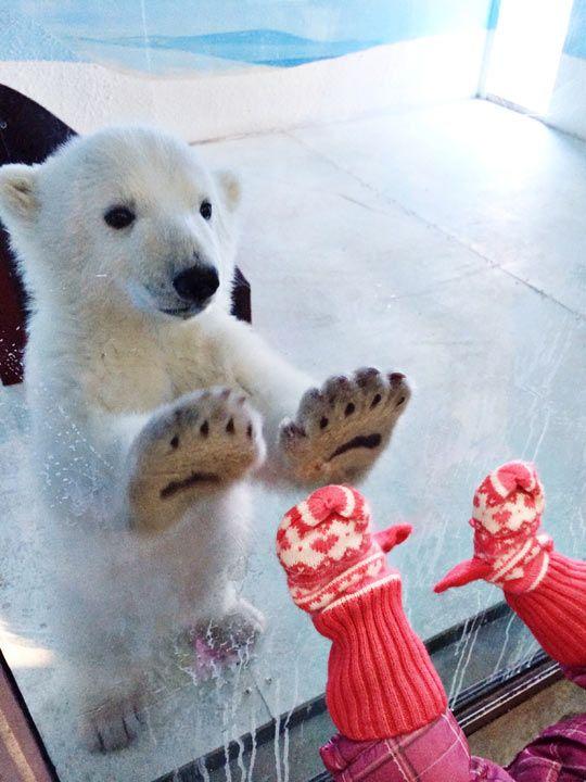 Bayi Beruang Kutub & Seorang Balita