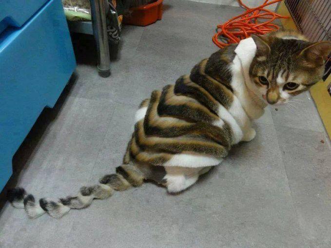 kucing kepang namanya