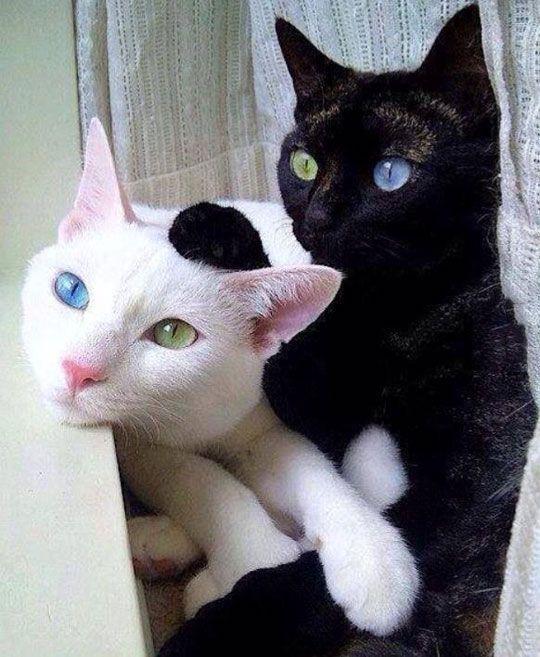 Perhatikan Warna Matanya