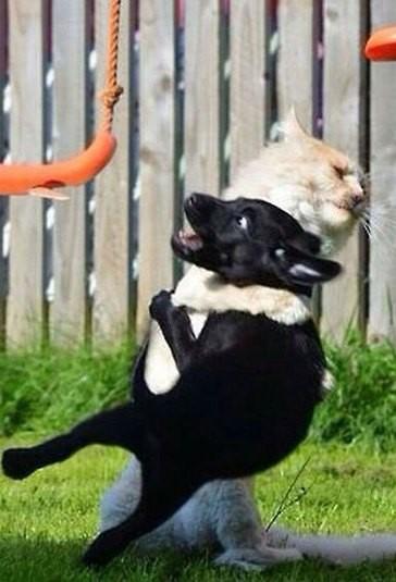 Kucingnya Jagoan!