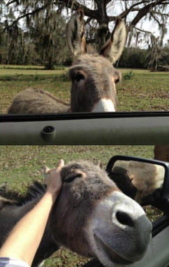 Scratch Donkey