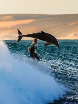 Berselancar bareng lumba lumba, momen yang susah banget dicari nih !