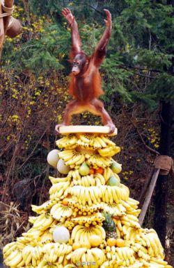pesta perayaan hari monyet sedunia baru saja diselengarakan di cina.. ne persembahannya.. wakwkakwka