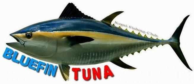 Mengenal Jenis Ikan Tuna