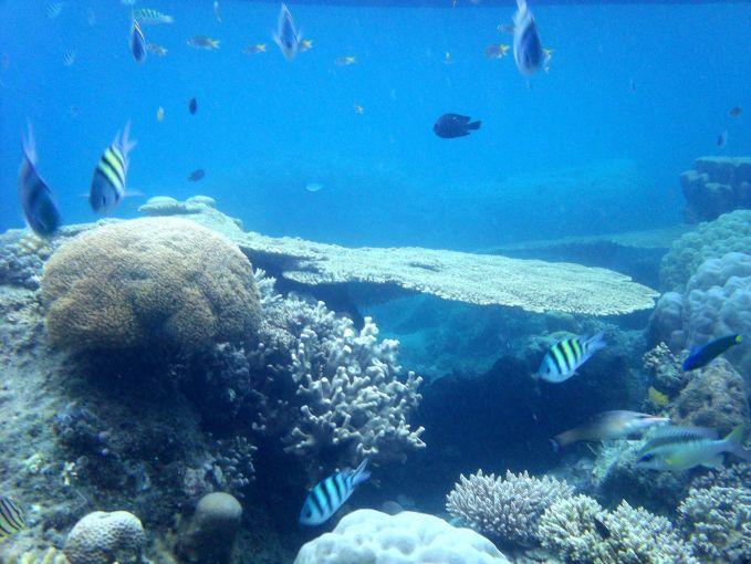 Pulau Tidung dengan beragam keindahan terumbu karangnya mampu memanjakan mata siapa saja yang memandang. Pulau tidung kepulauan seribu ini punya pesona lainnya, cek yuk http://www.alif-travelpulauseribu.com/p/paket-wisata-pulau-tidung.html