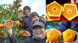 Di Jepang ada jeruk berbentuk segi lima yang dinamai Gokaku no Iyokan.