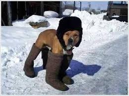 anjing pake sepatu boot, ada ada saja