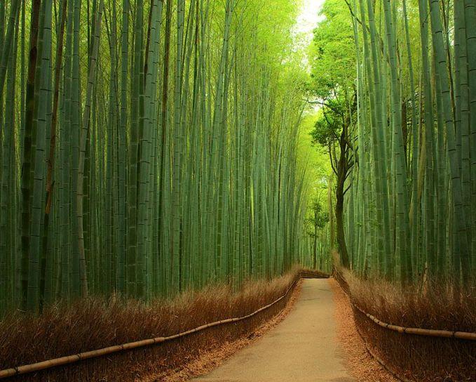 Hutan Bambu - Jepang