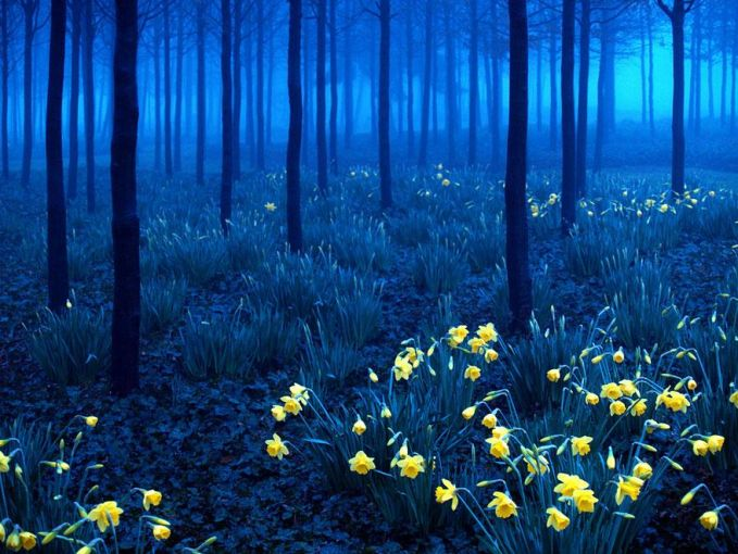 Black Forest - Jerman