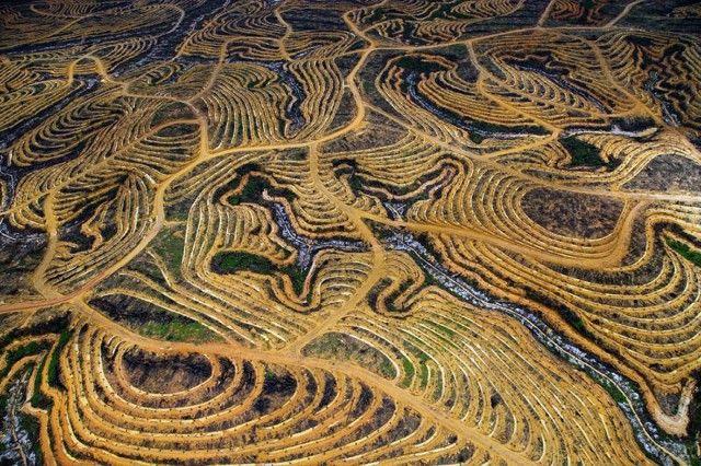 Hutan di Indonesia yang mulai ditebang pohonnya dan digantikan dengan pohon sawit